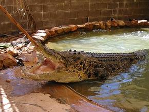 Wyndham Zoological Gardens and Crocodile Park - Redcliffe Tourism