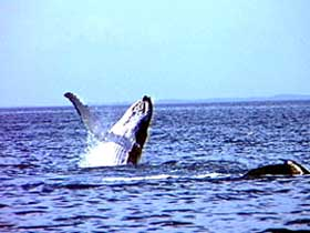 Whale Watching - Redcliffe Tourism