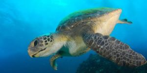 Byron Bay Dive Centre - Redcliffe Tourism