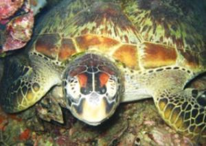 Adrenalin Snorkel and Dive - Redcliffe Tourism